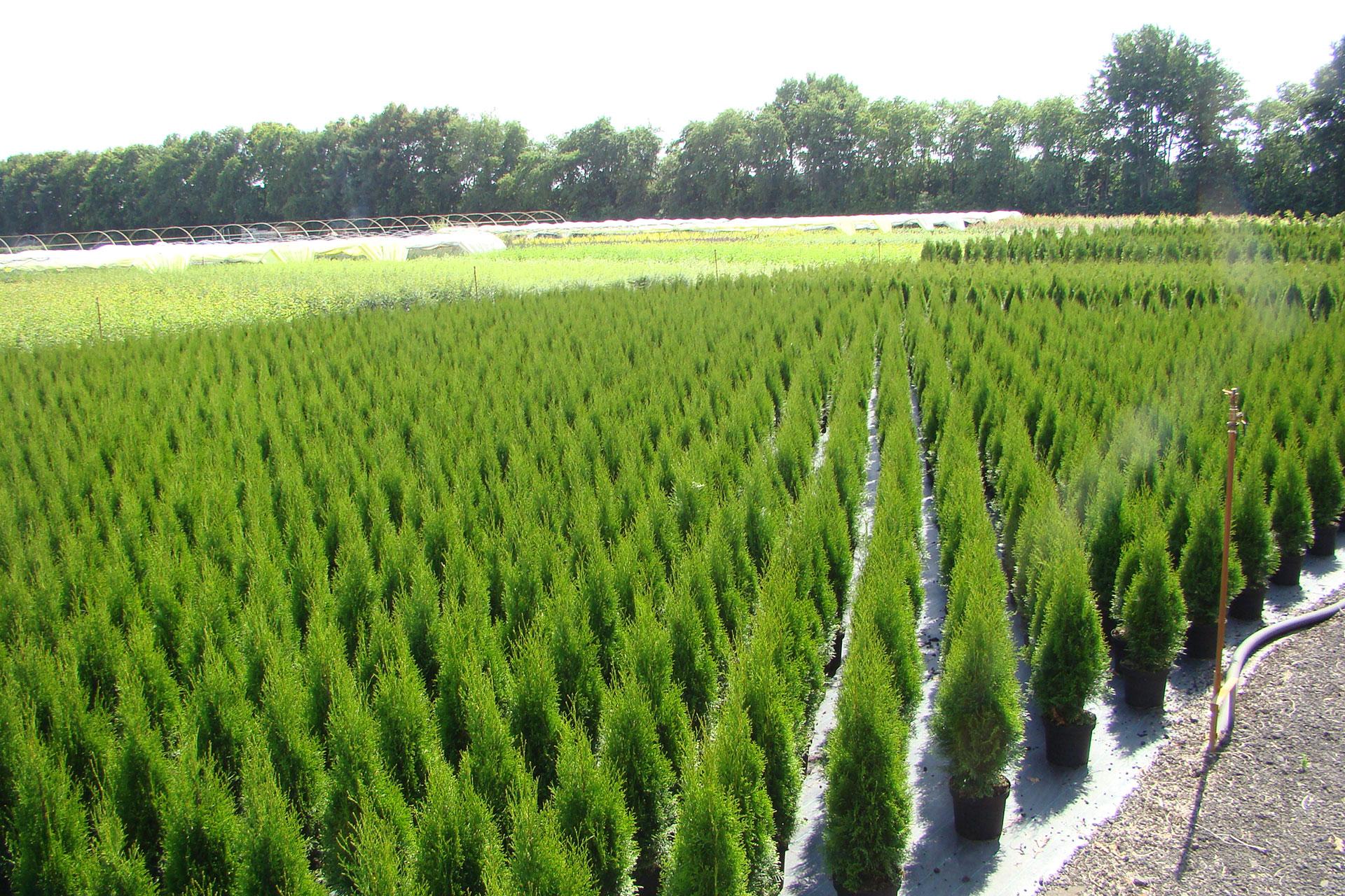 Sortiment Hinrichs Pflanzen